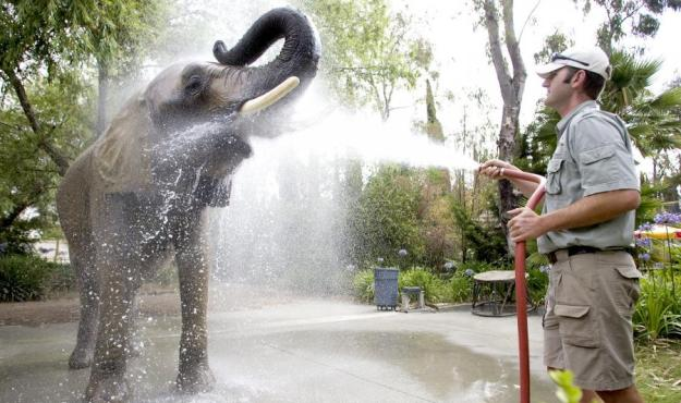 elephant wash