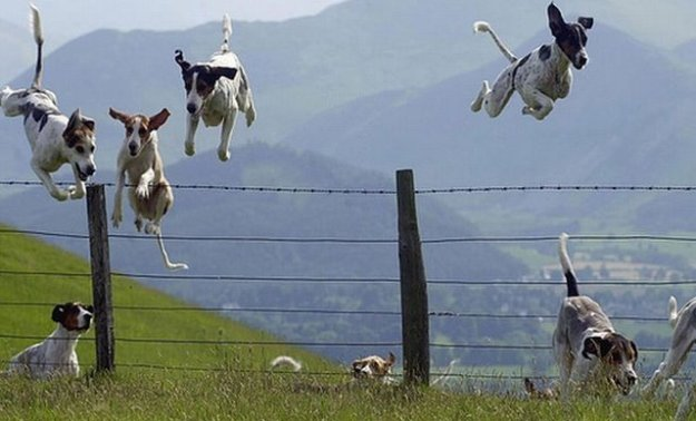 jumping doggies