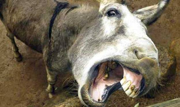 donkey mouth